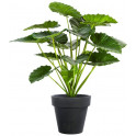Alocasia Calidora Bush artificiel 75 et 95 cm