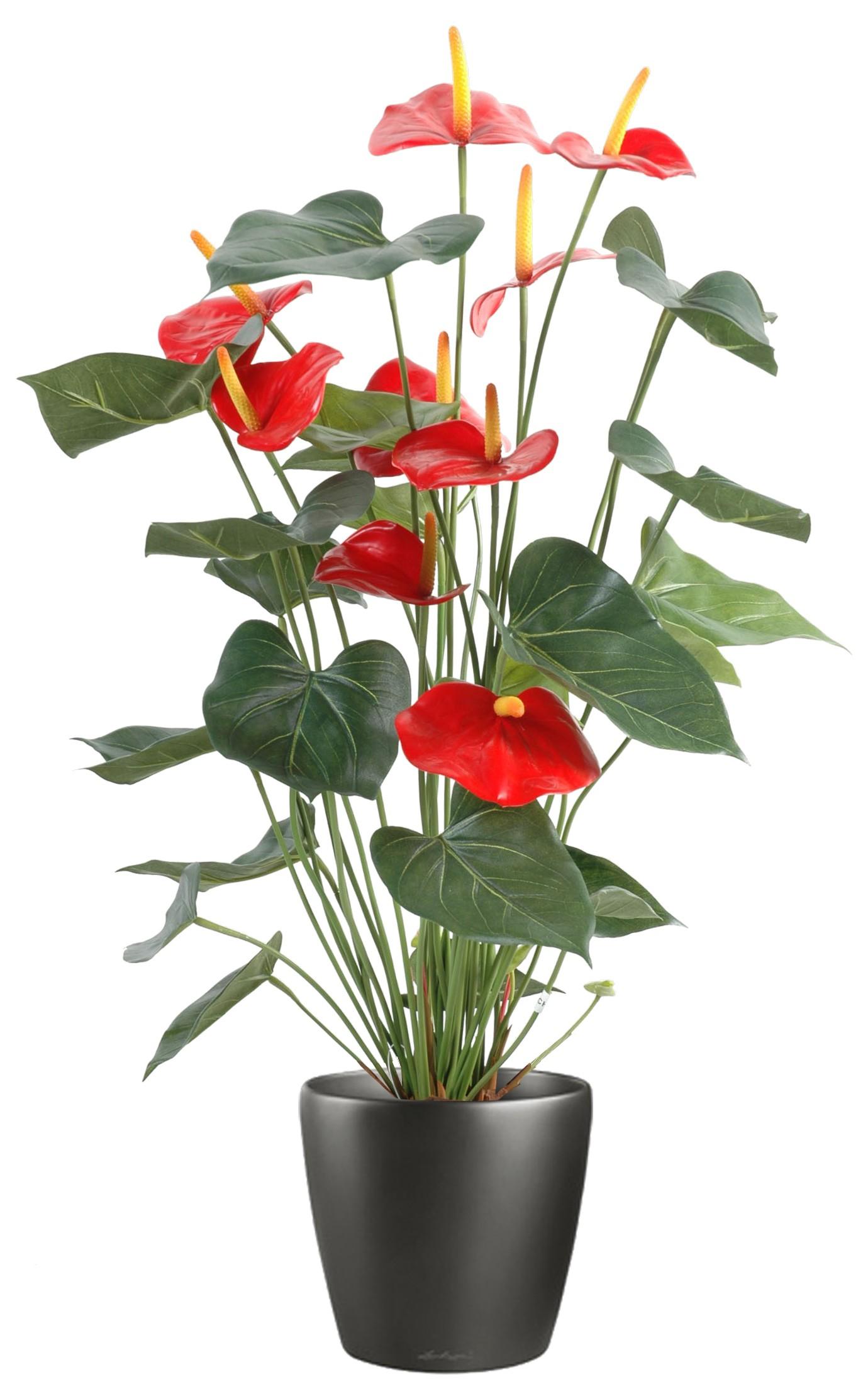 Fleurs Exotiques Artificielles Fleurs Artificielles Reflets