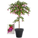 FUCHSIA artificiel UMBRELLA 140 cm
