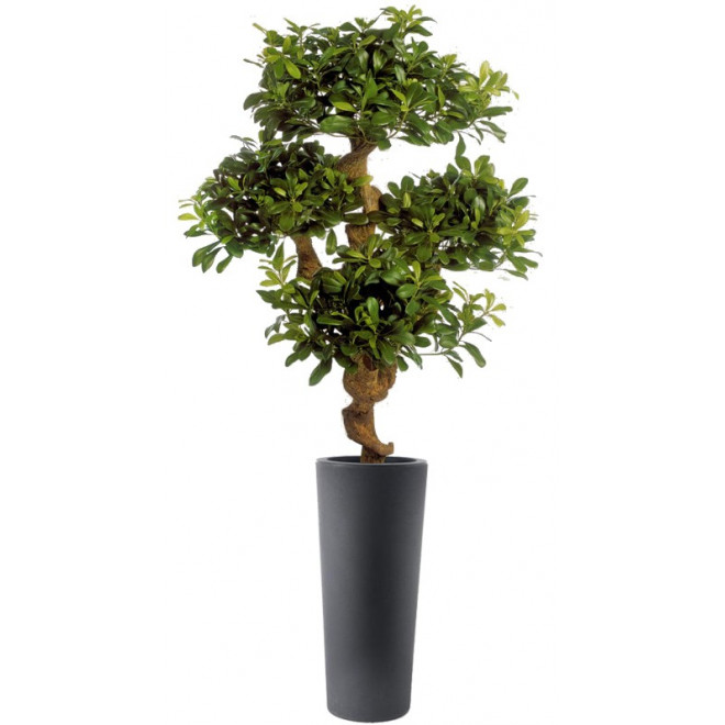 PITTOSPORUM artificiel MOUNTAIN tree 120 cm