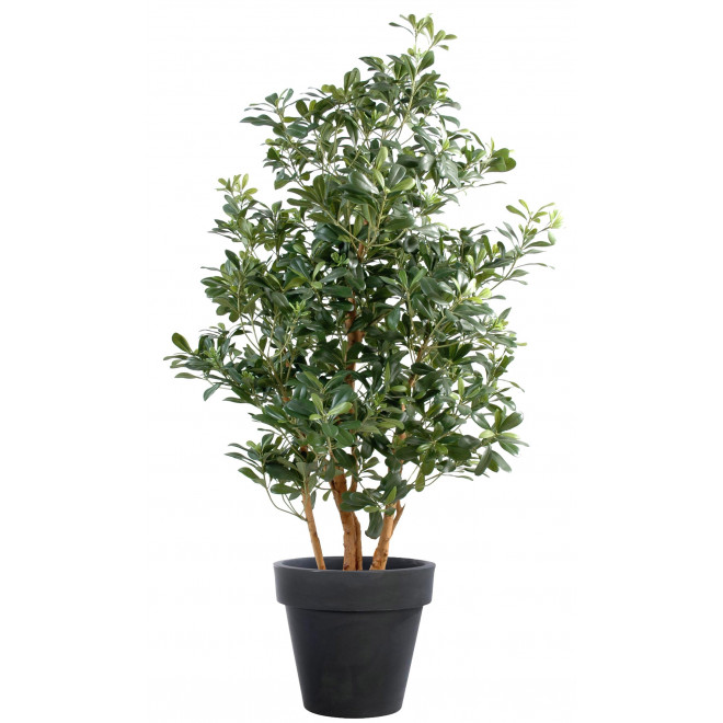 PITTOSPORUM artificiel 160 cm