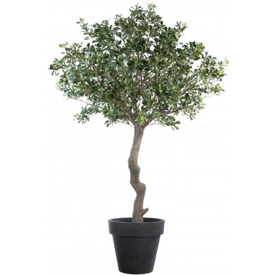 PITTOSPORUM artificiel arbre 260 cm
