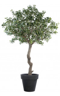 PITTOSPORUM artificiel arbre  260 cm