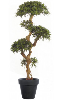 PODOCARPUS artificiel on crazy trunc . . . . 135 et 160 cm