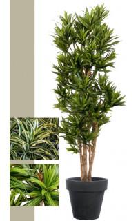 Dracena artificiel (ou DRACAENA) Reflexa new 120 à 185 cm