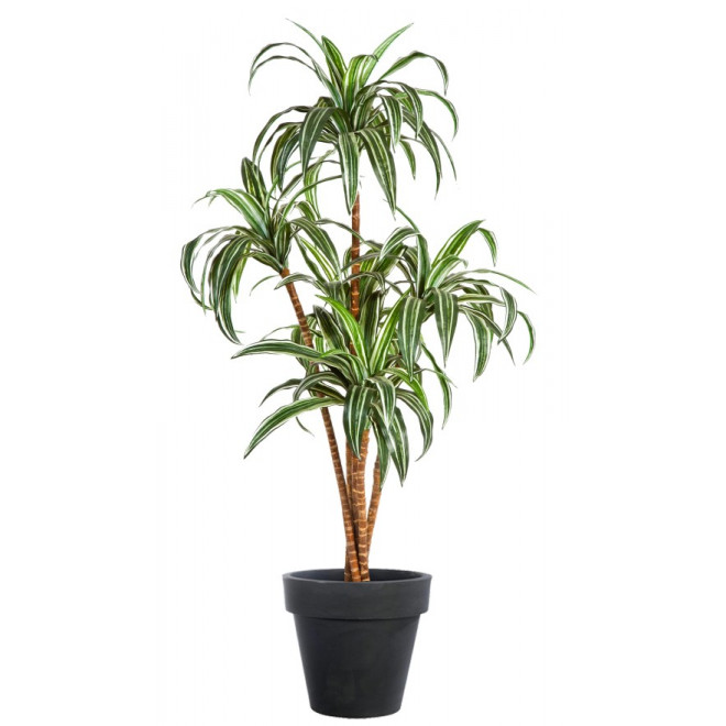 DRACENA artificiel (ou DRACAENA) arbre 120 et 150 cm