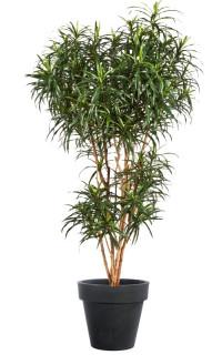 DRACENA artificiel (ou Dracaena) Reflexa Anita Tree 120 à 210 cm