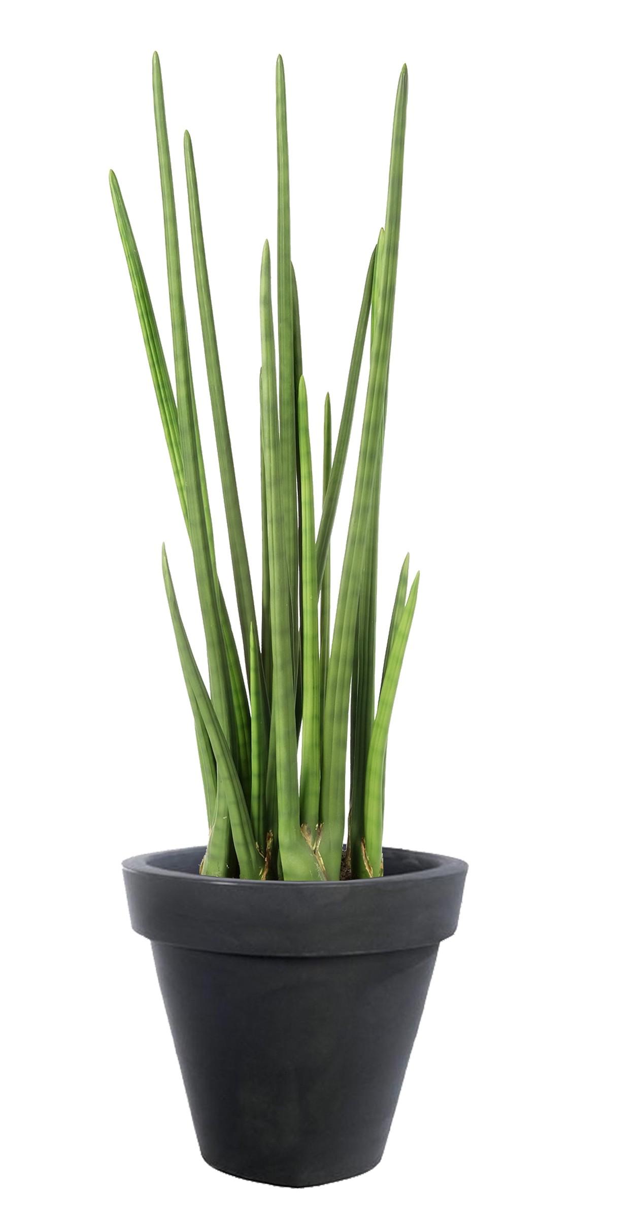 Plante Sanseviere Artificielle
