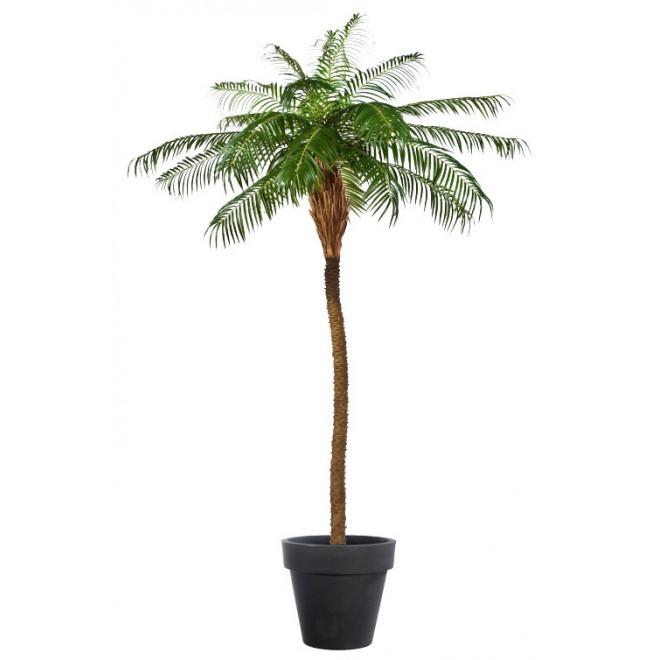 PHOENIX artificiel PALM TREE  225 à 280 cm