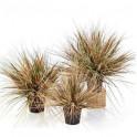 ONION GRASS artificiel AUTOMNE 50 à 70 cm