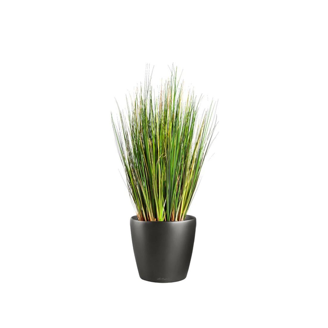 herbe artificielle foxtail 60 cm sans plumeau fleurs des champs artificielles reflets nature lyon. Black Bedroom Furniture Sets. Home Design Ideas