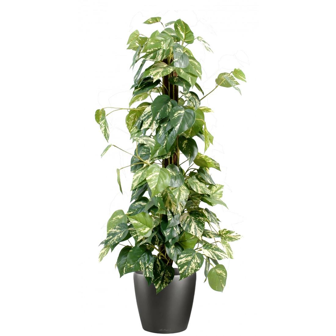 Tuteur coco for Plante artificiel interieur