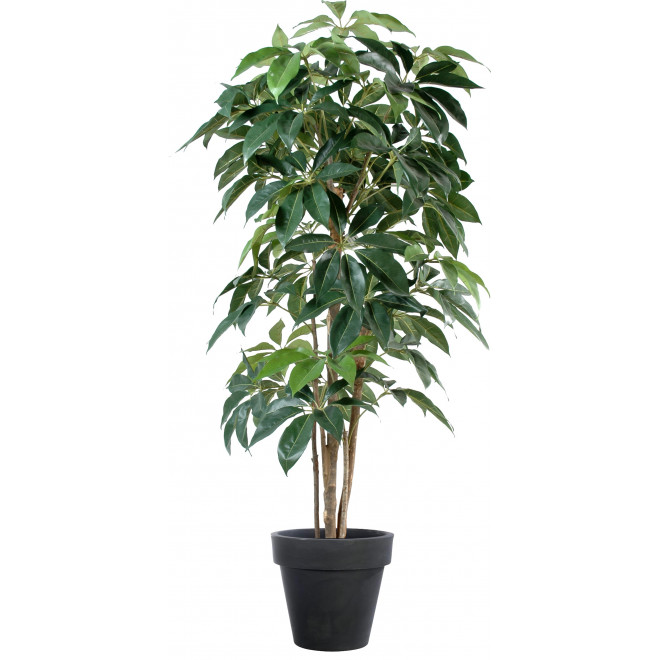 SCHEFFLERA artificiel AMATA  150 à 210 cm
