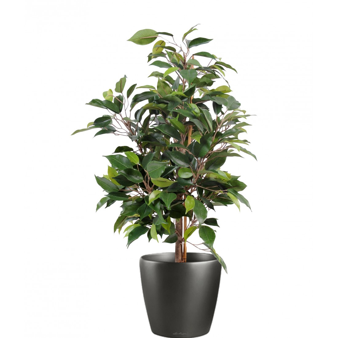 Arbres artificiels ficus artificiels artificielles for Ficus artificiel