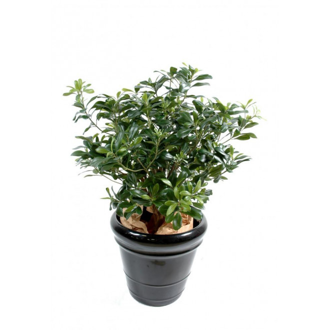 PITTOSPORUM artificiel buisson 80 cm