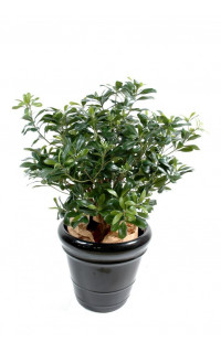 PITTOSPORUM artificiel buisson  55 cm