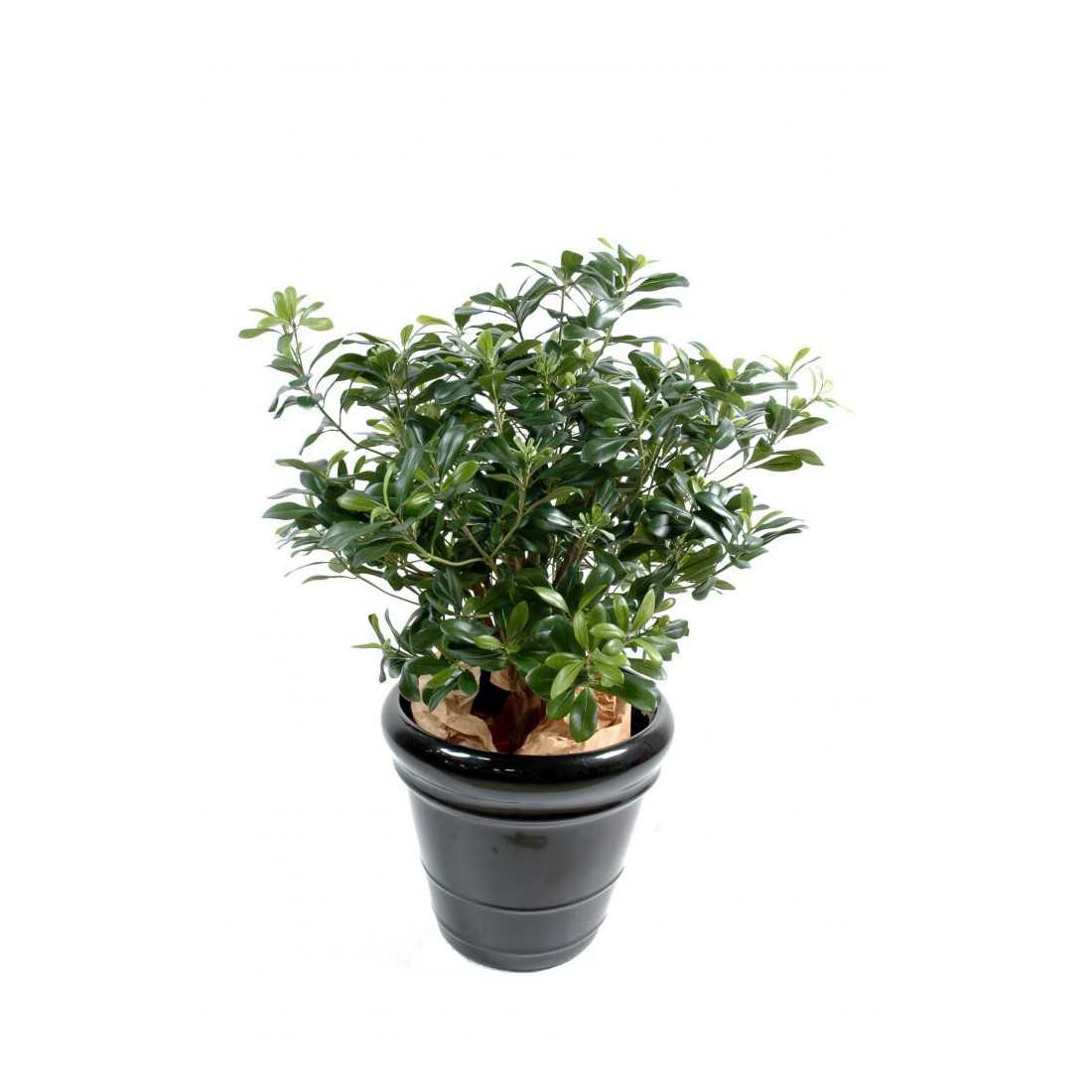 Pittosporum artificiel buisson 55 cm arbres for Buisson synthetique