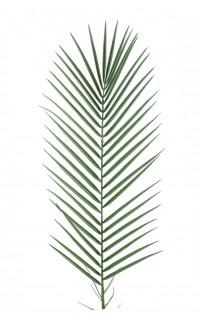 FEUILLE DE PALMIER artificiel PLAST 95 cm