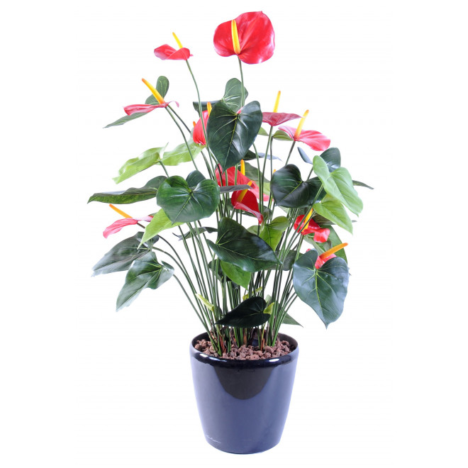 ANTHURIUM en pot 80 cm
