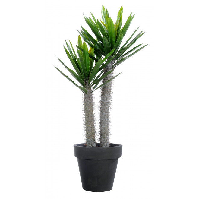 PACHYPODIUM artificiel plast 95 cm