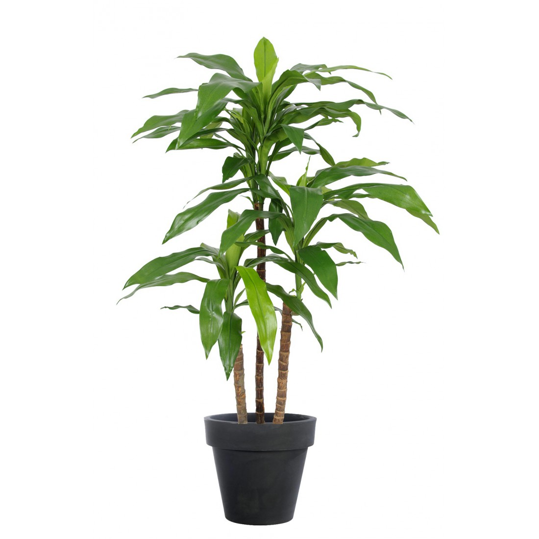 dracena artificiel ou dracaena fragrans janet craig 95 et 145 cm dracaena artificiels. Black Bedroom Furniture Sets. Home Design Ideas