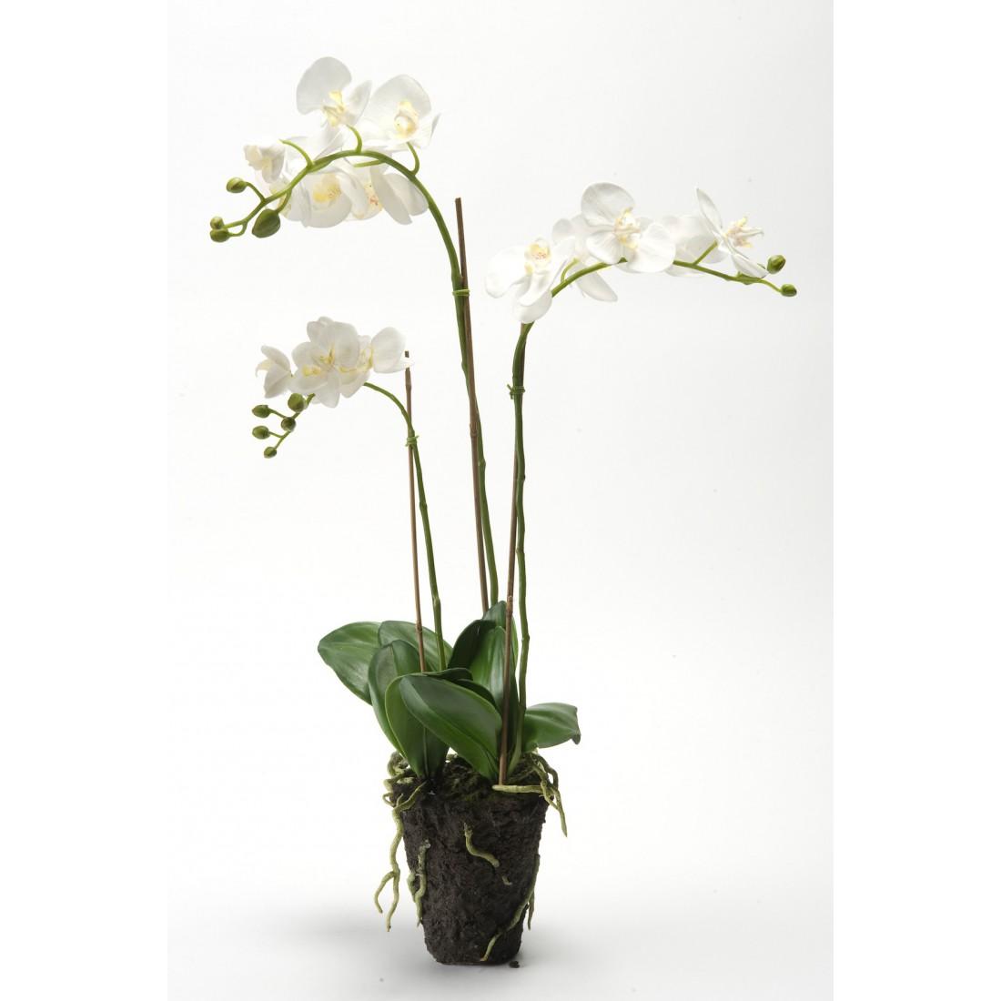 orchidee 80 cm