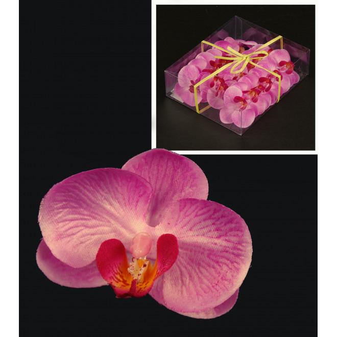 boite 18 fleurs PHALAENOPSIS