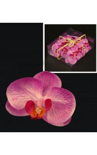 boite 18 fleurs PHALAENOPSIS rose