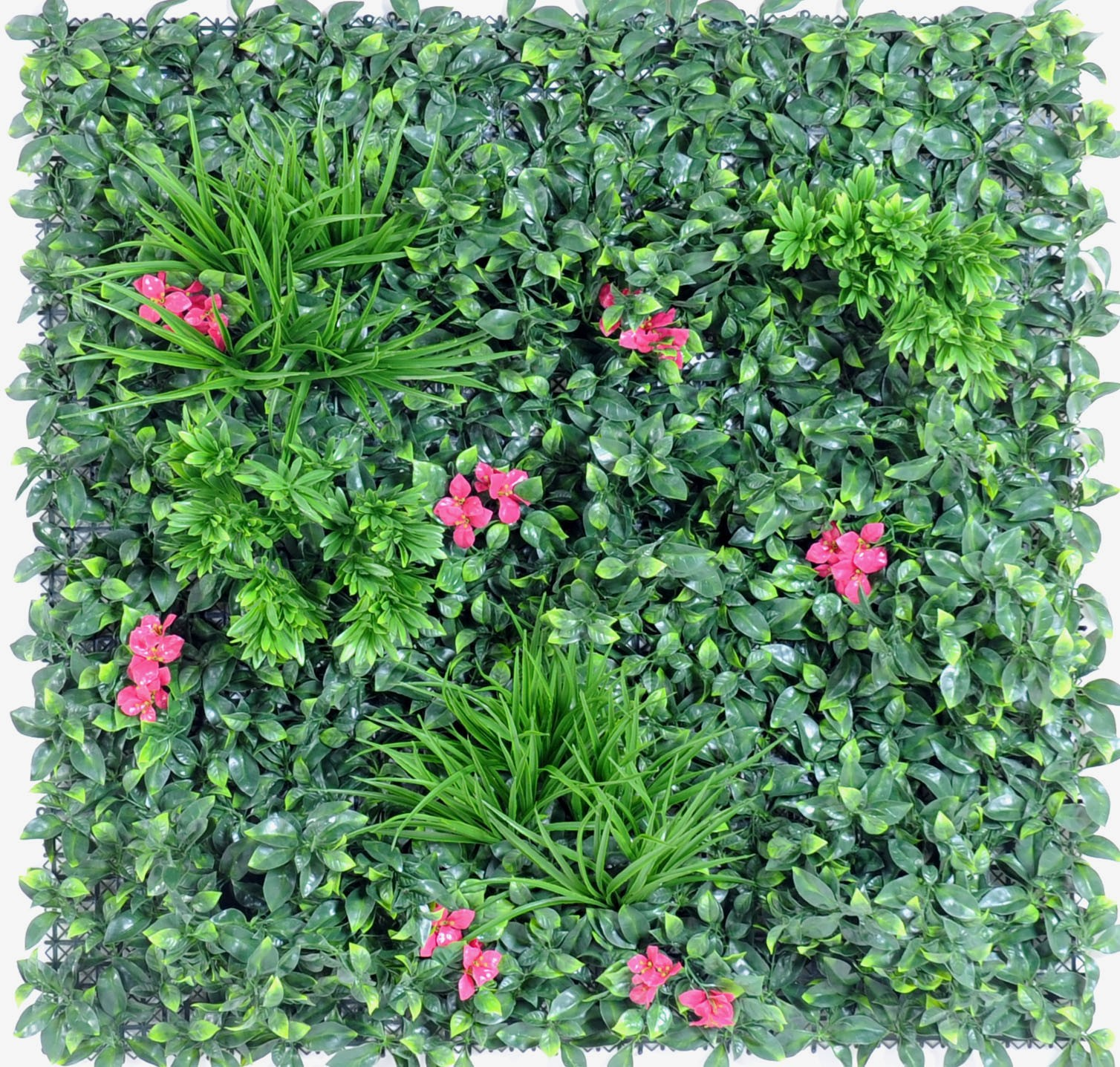 Plante retombante exterieur latest ipome tricolore with for Mur vegetal exterieur synthetique