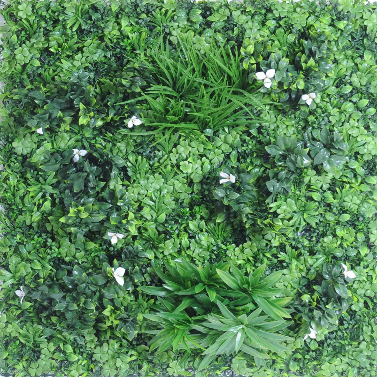 Plantes Pour Mur Végétal Extérieur mur vegetal c 100 x 100 cm
