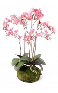 composition Phalaenopsis ORCHIDEE artificielle 77 cm