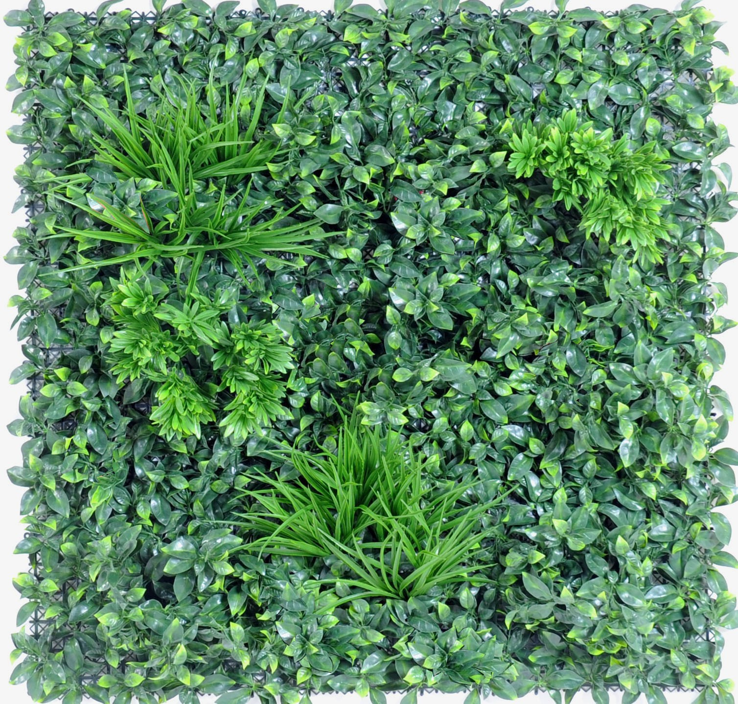 Plantes Pour Mur Végétal Extérieur mur vegetal e 100 x 100 cm