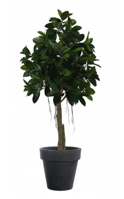 FICUS artificiel ELASTICA (Rubber plant tree) 220 cm