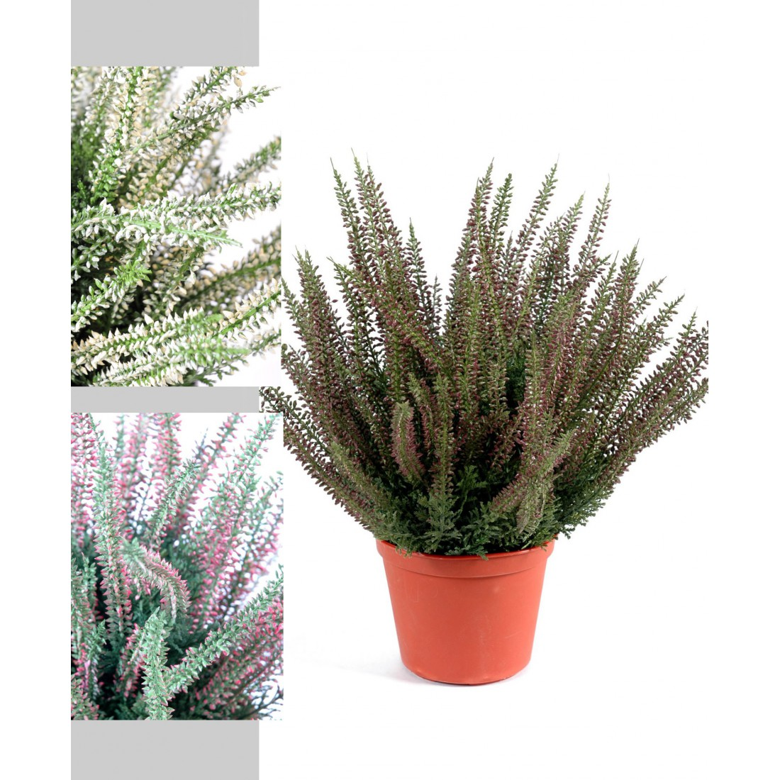 Plantes Fleuries En Pot Exterieur bruyere en pot 35 cm - plantes fleuries | reflets nature