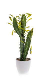 CACTUS euphorbia artificiel en pot 55 cm