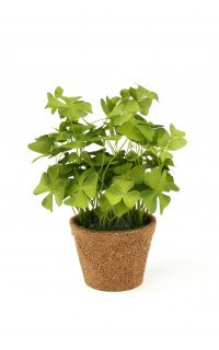 TREFLE OXALIS vert artificiel en pot 25 cm