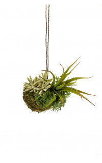 suspension succulente 22 cm