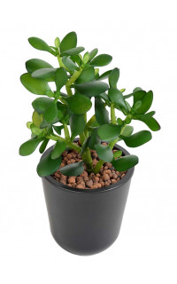 CRASSULA artificiel JADE 30 cm