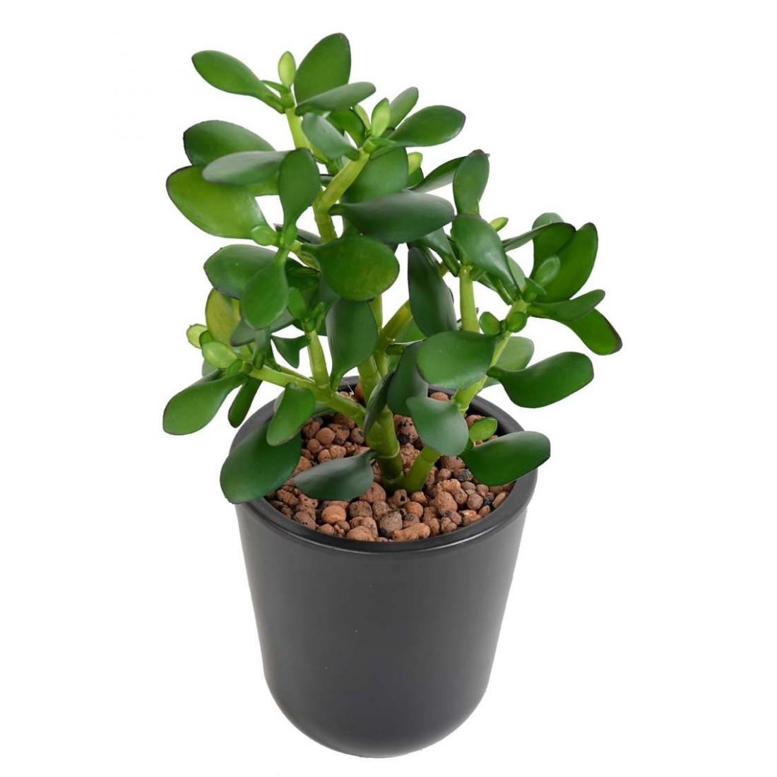 crassula artificiel jade 30 cm cactus plantes grasses artificiels reflets nature lyon. Black Bedroom Furniture Sets. Home Design Ideas