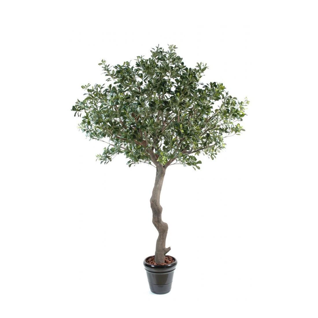 pittosporum artificiel arbre 260 cm arbres mediterraneens reflets nature lyon. Black Bedroom Furniture Sets. Home Design Ideas