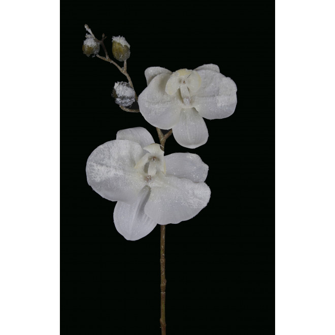 Orchidée PHALAENOPSIS artificielle givrée 72 cm