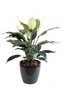 SPATHIPHILUM artificiel  5 fleurs 73 cm