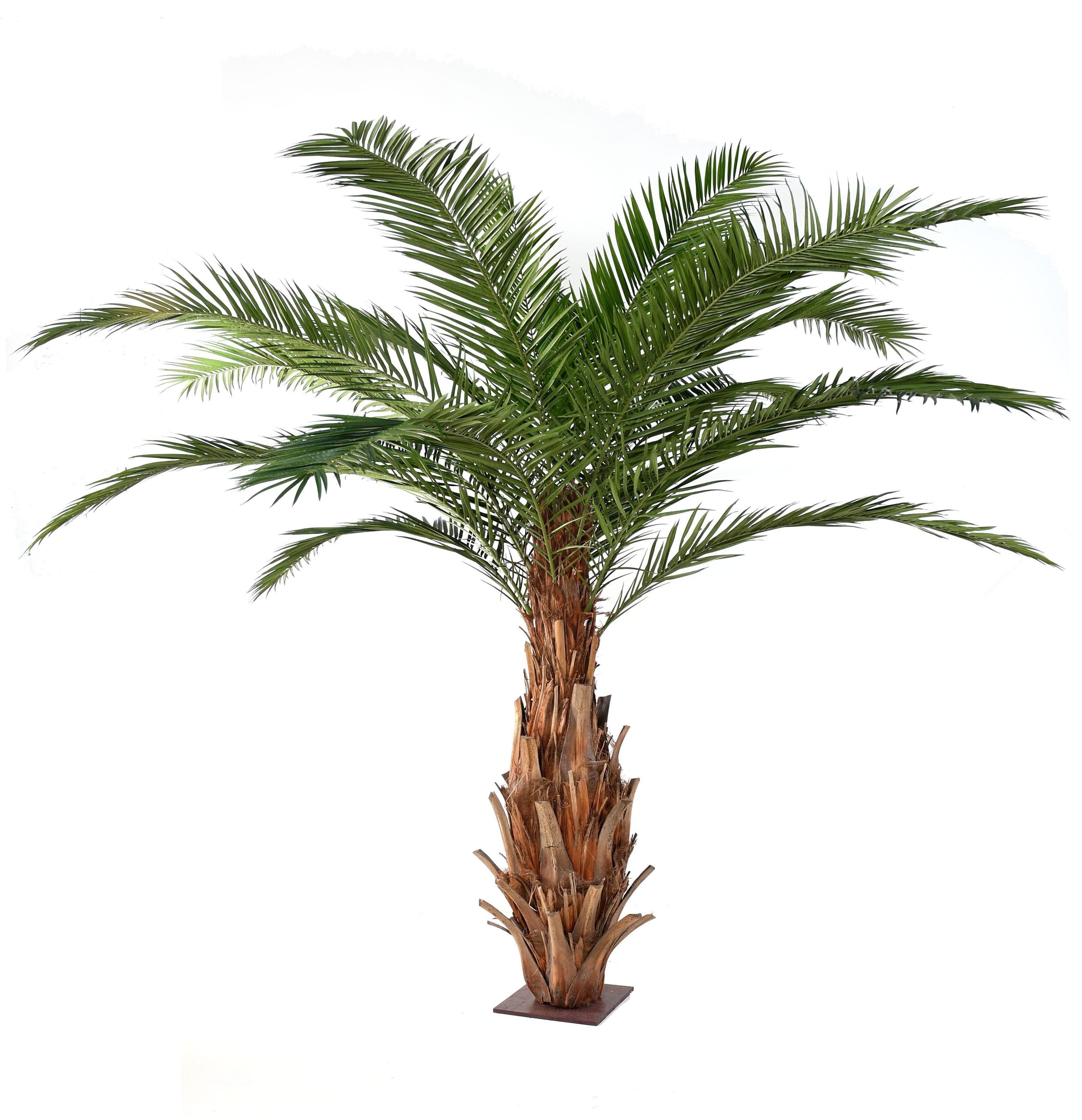 arbre palmier pas cher