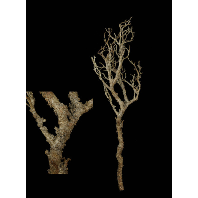 Branche 92 cm