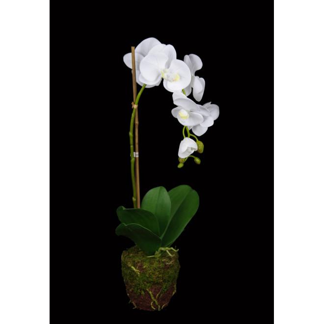 composition Phalaenopsis ORCHIDEE artificielle 57 cm en motte