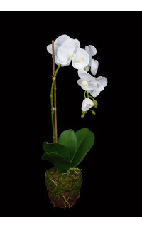 composition Phalaenopsis ORCHIDEE artificielle 57 cm en motte