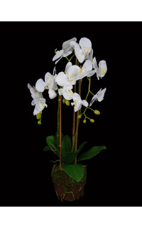 composition Phalaenopsis ORCHIDEE artificielle 70 cm en motte