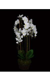 composition Phalaenopsis ORCHIDEE artificielle 94 cm en motte