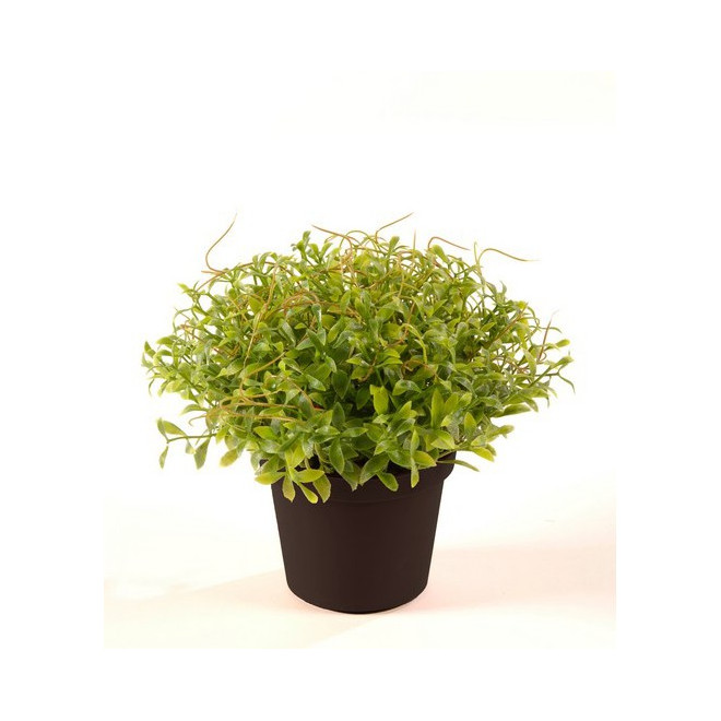 CRESSON artificiel en pot 17 cm
