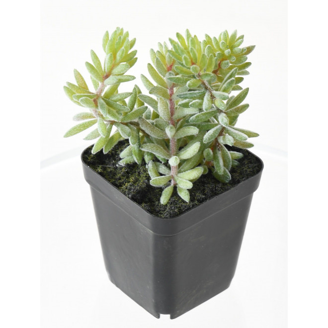 Succulente artificiel EN POT 16 cm